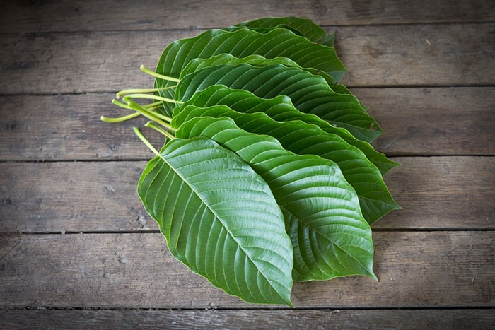 what kratom color is the strongest 2020 guide 1